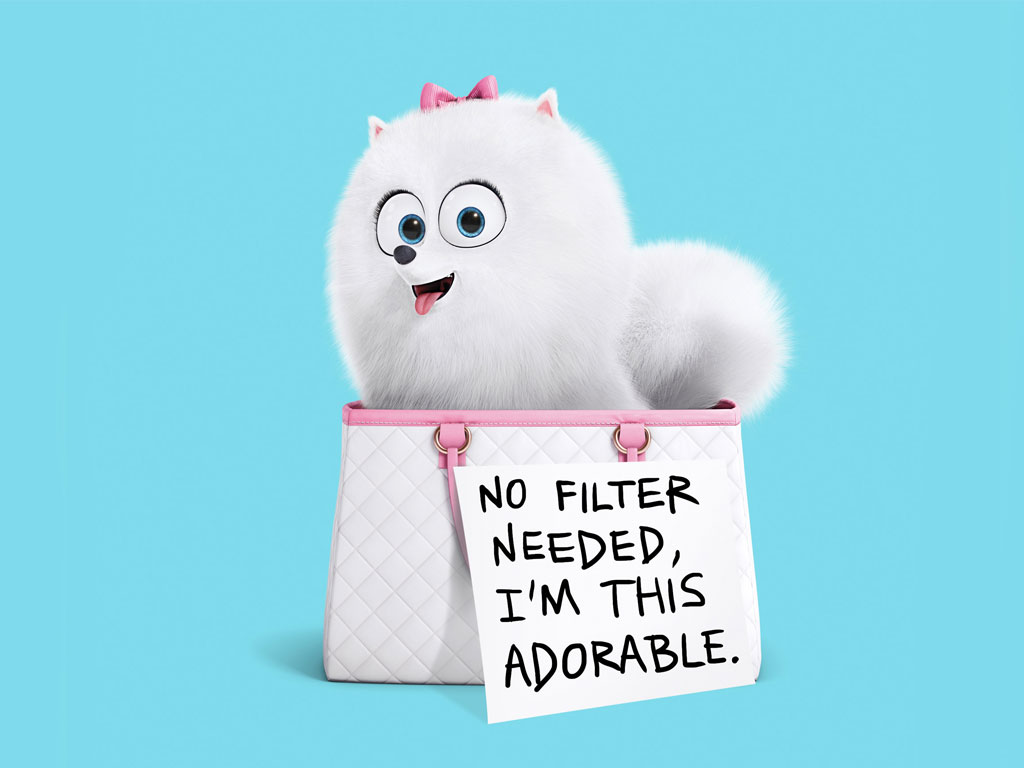 The Secret Life Of Pets HQ Movie Wallpapers